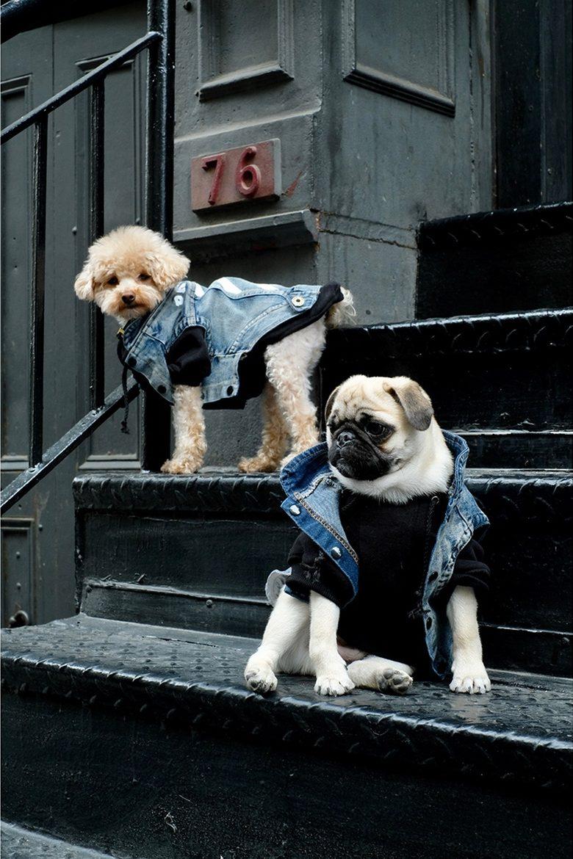 pawkier streetwear para cachorros 01 e1494598255688 - Pawkier: streetwear bom para cachorro