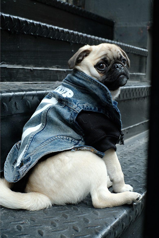 pawkier streetwear para cachorros 02 e1494598413566 - Pawkier: streetwear bom para cachorro