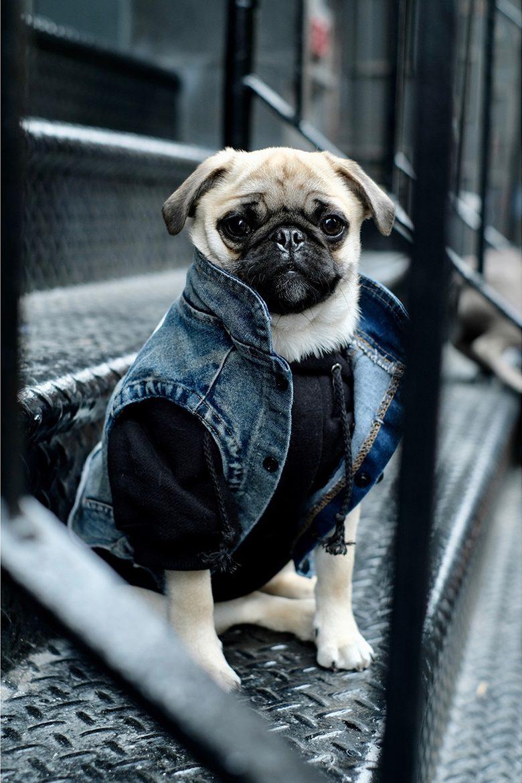 pawkier streetwear para cachorros 03 e1494598679427 - Pawkier: streetwear bom para cachorro