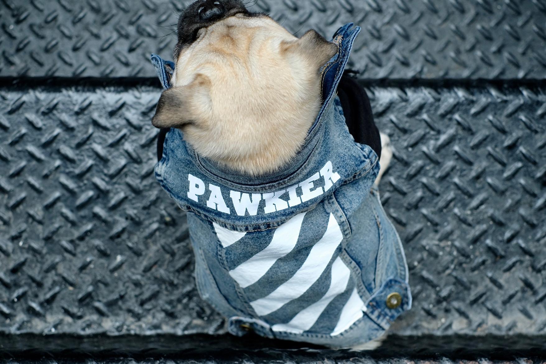 pawkier streetwear para cachorros 04 - Pawkier: streetwear bom para cachorro