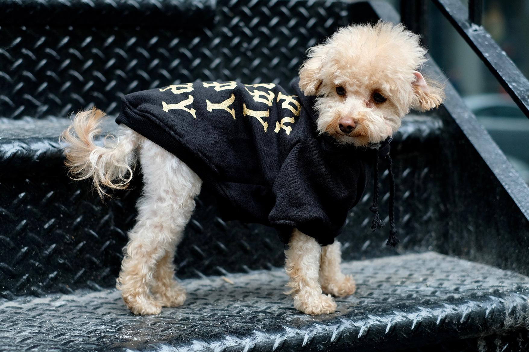 pawkier streetwear para cachorros 05 - Pawkier: streetwear bom para cachorro
