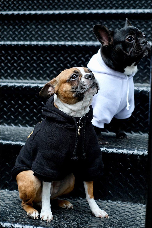 pawkier streetwear para cachorros 07 e1494598491190 - Pawkier: streetwear bom para cachorro
