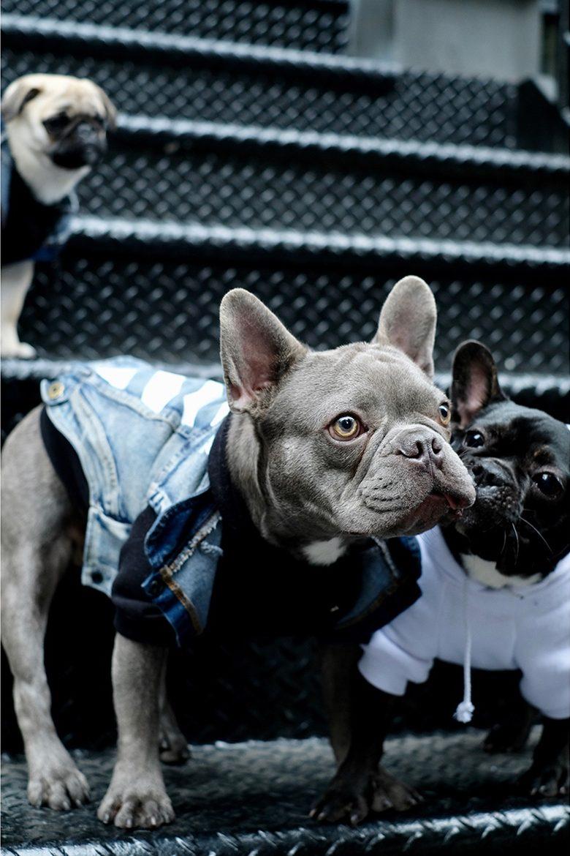 pawkier streetwear para cachorros 08 e1494598519111 - Pawkier: streetwear bom para cachorro