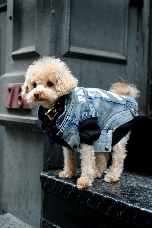 pawkier streetwear para cachorros 10 e1494598550511 - Pawkier: streetwear bom para cachorro