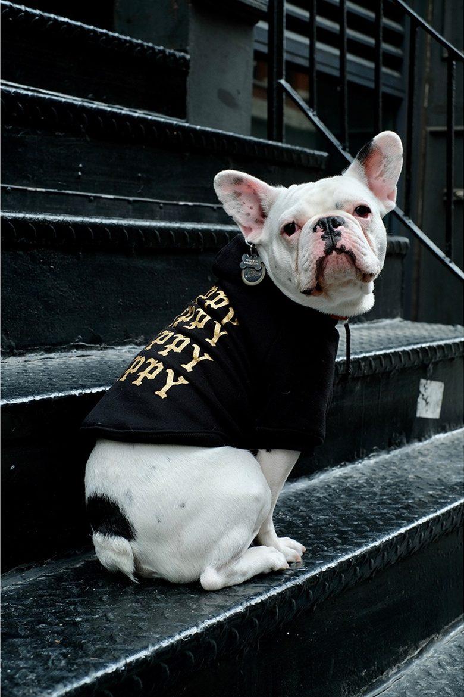 pawkier streetwear para cachorros 11 e1494598570277 - Pawkier: streetwear bom para cachorro
