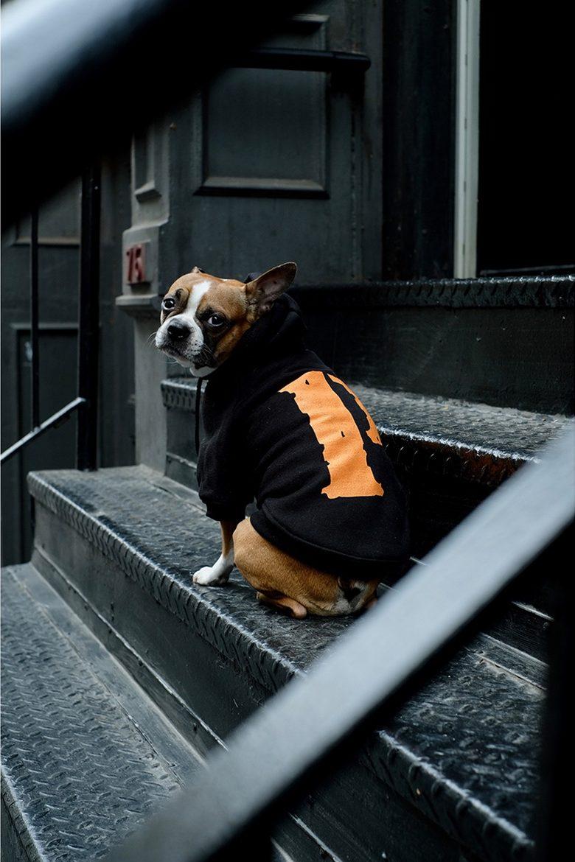 pawkier streetwear para cachorros 12 e1494598594284 - Pawkier: streetwear bom para cachorro