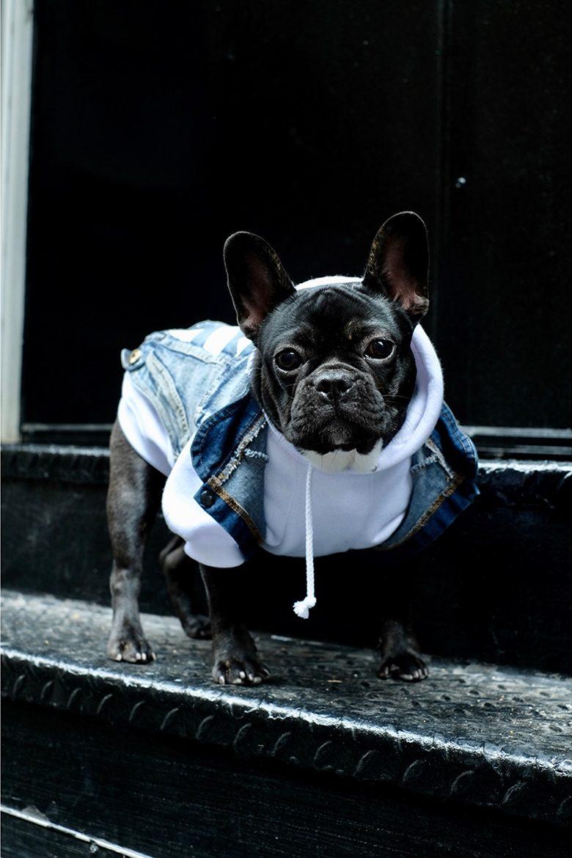 pawkier streetwear para cachorros 13 e1494598616176 - Pawkier: streetwear bom para cachorro
