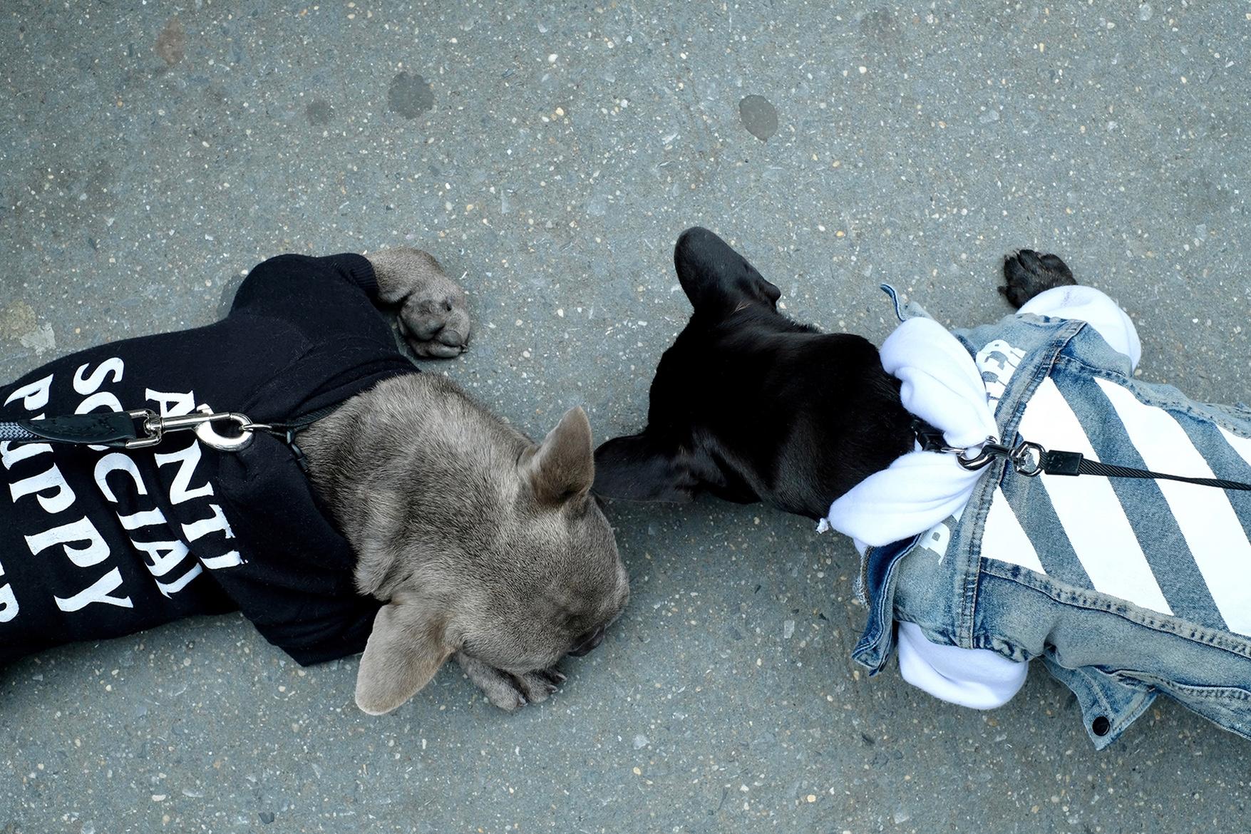 pawkier streetwear para cachorros 15 - Pawkier: streetwear bom para cachorro