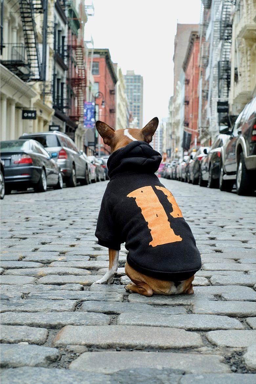 Pawkier: streetwear bom para cachorro